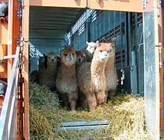 Alpacas of Germany Ltd.